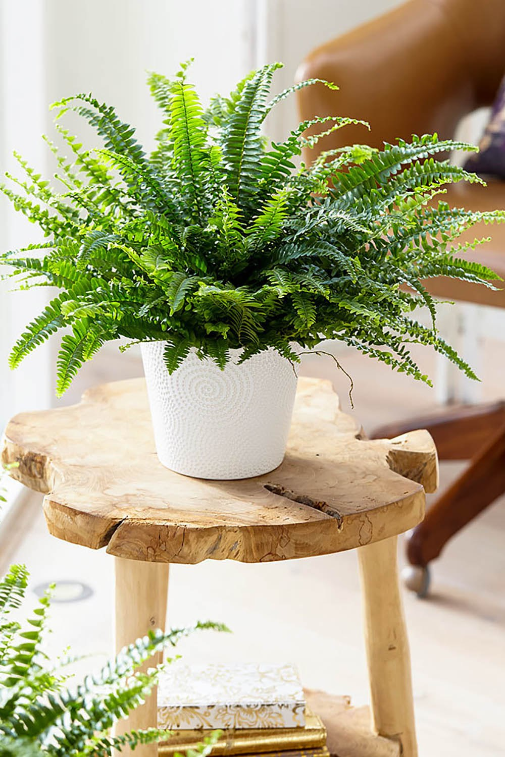 indoor-plants-boston-fern-2-1