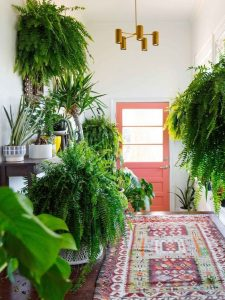 indoor-plants-boston-fern-3
