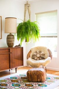 indoor-plants-boston-fern-5