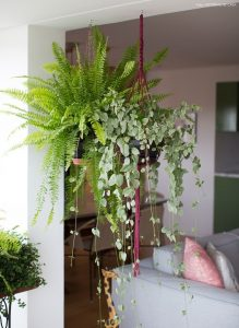 indoor-plants-boston-fern-6