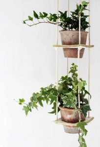 indoor-plants-ivy-4