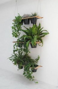 indoor-plants-ivy-5