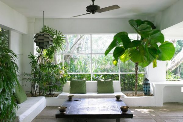 indoor-plants-large-plants