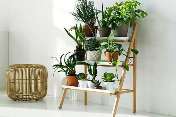 indoor-plants-large-plants-all-plants