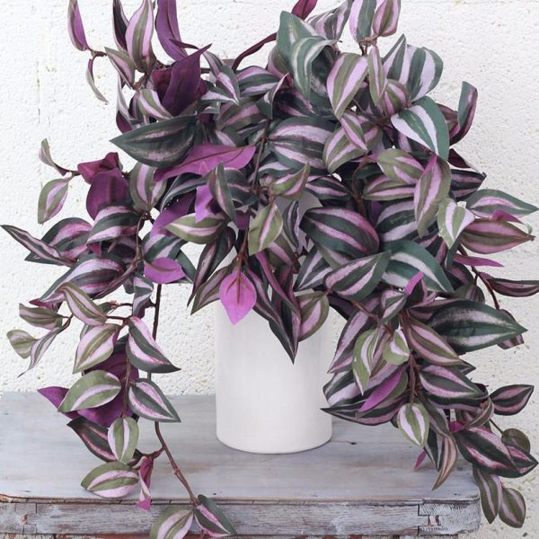 indoor-plants-purple-zebrina-tradescantia-1