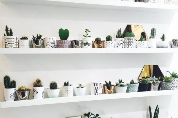 indoor-plants-small-plants