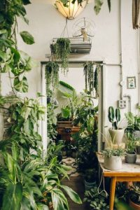 indoor-plants-string-of-pearls-5