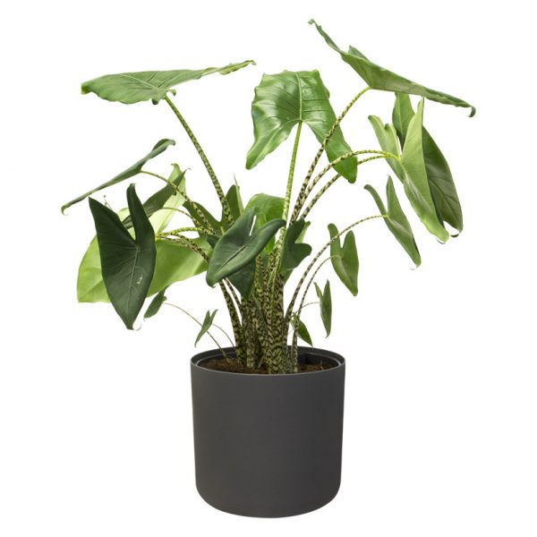 black-indoor-plant-pot-0