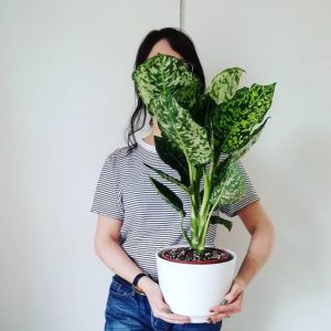 indoor-plants-dieffenbachia-13